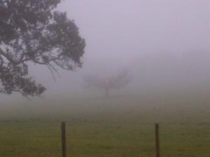 yan yean fog